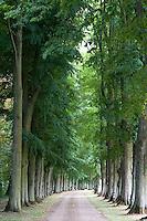 An elegant avenue of lime trees leads to the Chateau de Temezay