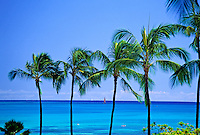 Four coconut palm trees set against a background of clear blue skies meeting the horizon of the beautiful multi-hued Pacific Ocean.