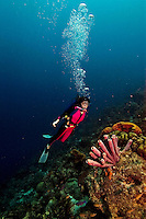20 August 2004: Scuba diver Sally Herschorn glides over a grouping of tube sponges on the reef offshore from Captain Don's Habitat, on the Dutch island of Bonaire, in the Netherland Antilles. First dive with Aquatica D100 housing, and twin Ikelite 225 strobes (one on slave mode) 1/4 power manual setting...Mandatory Photo Credit: Ed Wolfstein Photo