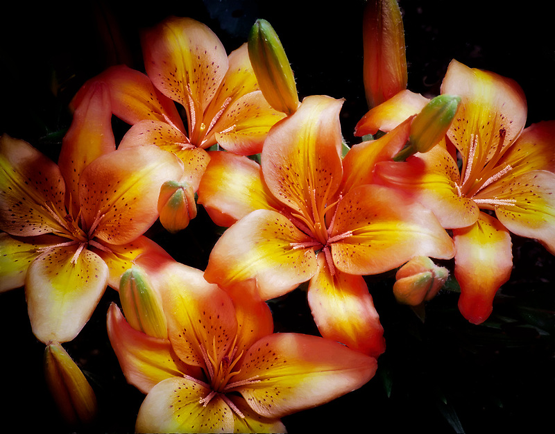 Orange lillies. Crystal Garden. Victoria, British Columbia, Canada.