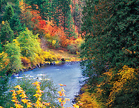 Fall colored trees along the North Umpqua River, Oregon