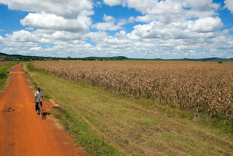 A boy on a bicycle passes a field of maize in the Mwanza district of northwest Tanzania.