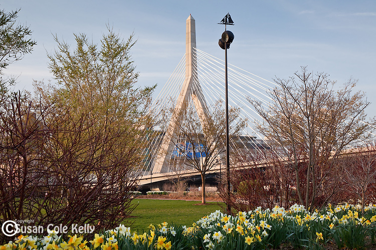 Daffodils in Paul Revere Park, Boston, MA, USA