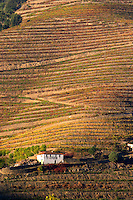 vineyards calem douro portugal