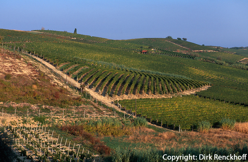 Italien, Piemont, Weinberge bei Monferrato, UNESCO-WeltkulturerbeWeltkulturerbe