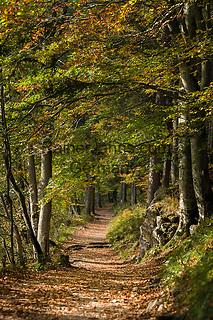 Austria; Styria; Lake Leopoldsteinersee: hiking trail around the lake in autumn colours | Oesterreich, Steiermark, Wanderweg um den Leopoldsteinersee im Herbst