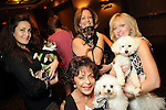 """Clockwise from left: A.T. Houston with Bebe Butters, Sue Williamson with Hunter, Brenda Cheney with Frankie and Judy Nichols with Lilly at the """"Dog Days of Summer"""" Yappy Hour benefitting Citizens for Animal Protection and Golden Beginnings Golden Retriever Rescue at Hotel Derek Wednesday July 21,2010.(Dave Rossman/For the Chronicle)"""