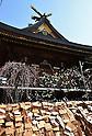 Apricot blossoms in full bloom at Yushima Tenjin