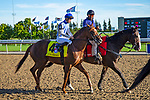 TORONT,CANADA-SEP 14: Synchrony is post parading before the Woodbine Mile at Woodbine Race Track on September 14,2019 in Toronto,Ontario,Canada. Kaz Ishida/Eclipse Sportswire/CSM