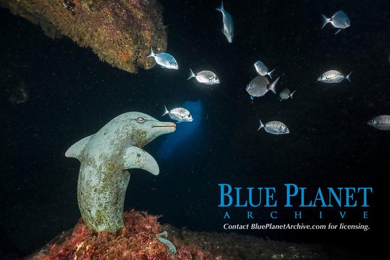 Dolphin Sculpture in Cave, Dofi North, Medes Islands, Costa Brava, Mediterranean Sea, Spain