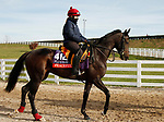 Peaceful, trained by trainer Aidan P. O'Brien, exercises in preparation for the Breeders' Cup Filly & Mare Turf at Keeneland Racetrack in Lexington, Kentucky on November 5, 2020.