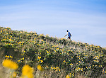Hiker walking through the arrow leaf balsamroot flowers on Mount Sentinel trails in Missoula, Montana