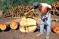 Released, scaler measures logs at lumber mill, Scotia, California
