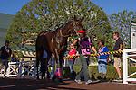 SEP 26,2014:Ambitious Brew appears at the padock in the Eddie D Stakes at Santa Anita Park in Arcadia,CA. Kazushi Ishida/ESW/CSM