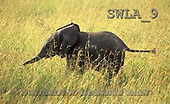 Carl, ANIMALS, wildlife, photos(SWLA9,#A#)