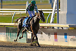 NEW ORLEANS, LA - FEBRUARY 20:<br /> Venus Valentine #3, ridden by Corey J Lanerie wins the Rachel Alexandra Stakes in the Louisiana Derby Preview Race Day at Fairgrounds Race Course on February 20,2016 in New Orleans, Louisiana. (Photo by Steve Dalmado/Eclipse Sportswire/Getty Images)