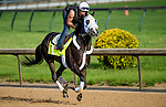 LOUISVILLE, KY - MAY 02: Tom's Ready, trained by Dallas Stewart and owned by G M B Racing, exercises and prepares during morning workouts for the Kentucky Derby and Kentucky Oaks at Churchill Downs on May 2, 2016 in Louisville, Kentucky. (photo by Scott Serio/Eclipse Sportswire/Getty Images)