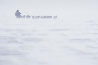 Jessie Royer runs into the 35 mph wind on Norton Sound between Shaktoolik and Koyuk during Iditarod 2009