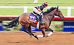 DEL MAR, CA - OCTOBER 28: War Flag, owned by Joseph Allen, LLC and trained by Claude R. McGaughey III, exercises in preparation for Breeders' Cup Filly & Mare Turf at Del Mar Thoroughbred Club on October 28, 2017 in Del Mar, California. (Photo by Alex Evers/Eclipse Sportswire/Breeders Cup)