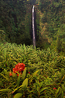 Akaka Falls framed by ginger, fern and bougainvillea. Big Island