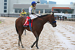 March 14, 2020: Nadal (1) with jockey Joel Rosario aboard after winning the Rebel Stakes at Oaklawn Racing Casino Resort in Hot Springs, Arkansas on March 14, 2020. Justin Manning/Eclipse Sportswire/CSM
