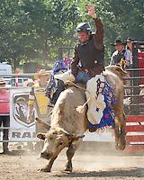 Rodeo Tweed, 2011