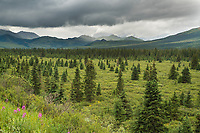 Denali National Park, Interior, Alaska