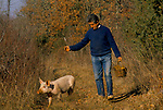 Truffling in Cahors France 1990s. French farmer used a pig to smell out the truffles on his land. They will be sold onto Jacques Pedeyre Frances largest truffle dealer and exporter.
