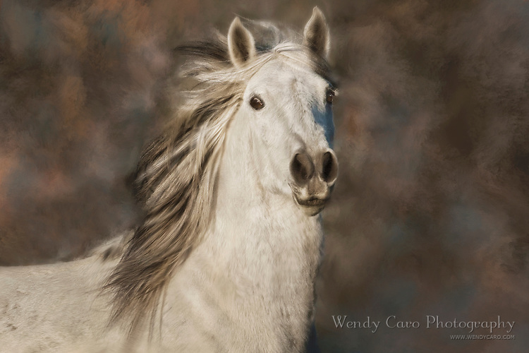 Portrait, head shot of white mustang with startled expression, fine art background