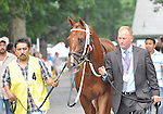 8.16.10 Kantharos enters the paddock for the Grade 2 Saratoga Special