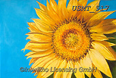 Malenda, FLOWERS, BLUMEN, FLORES, paintings+++++,USMT517,#f#, EVERYDAY