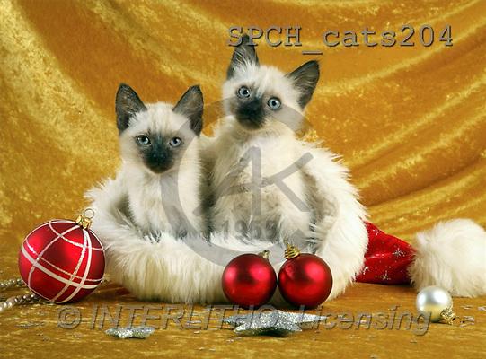 Xavier, CHRISTMAS ANIMALS, photos(SPCHcats204,#XA#)