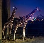 20160530 - PhotoWalk Vivid Taronga Zoo