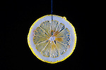 Lemon Slice, Food, multiple exposure, food in motion, unique food photo, in studio