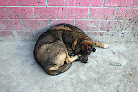 A dog hides in the shade in the town of Zaduo, in the far interior of the Tibetan Plateau., in western China.