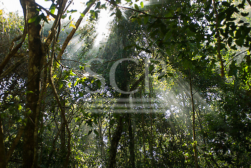 Mato Grosso State, Brazil. Aldeia Metuktire (Kayapo). Sun streamiong through the canopy of the rainforest.
