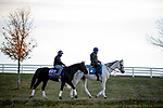 November 2, 2020: Extravagant Kid, trained by trainer Brendan P. Walsh, exercises in preparation for the Breeders' Cup Turf Sprint at Keeneland Racetrack in Lexington, Kentucky on November 2, 2020. Alex Evers/Eclipse Sportswire/Breeders Cup