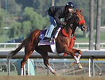 Flashy Ways, trained by Richard Baltas, exercises in preparation for the upcoming Breeders Cup at Santa Anita Park on October 31, 2012.