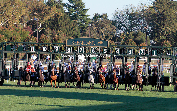 """LEXINGTON, KY - OCTOBER 08: The start of the Shadwell Turf Mile.  #7 Miss Temple City and jockey Edgar Prado win the 31st running of The Shadwell Turf Mile (Grade 1) $1,000,000  Breeders' Cup """"Win and You're In Mile Division"""" for owner The Club Racing, Allen Rosenblum and Sagamore Farm and trainer Graham H. Motion at Keeneland Race Course in Lexington, KY.  October 8, 2016, Lexington, Kentucky. (Photo by Candice Chavez/Eclipse Sportswire/Getty Images)"""
