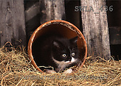 Carl, ANIMALS, photos(SWLA436,#A#) Katzen, gatos
