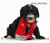 Kim, CHRISTMAS ANIMALS, photos, GBJBWP37929,#XA# stickers