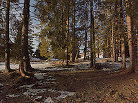 FOREST_LOCATION_90154
