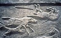 Assyria:  Detail, wild assess, Ashurbanipal Hunting Scene.  British Museum,  Photo '90.