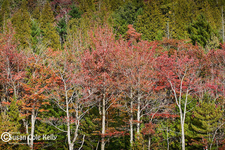 Fall foliage on Bubble Pond and the shoulder of Cadillac Mountain in Acadia National Park, Downeast, ME
