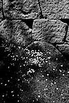 Greece 2009 , Nafplio, Greece, citadel, Mycenae, Artisan quarters, ruins, ancient architecture, Greco Roman, Athens, Erechtheum, Acropolis, Delphi, Parthenon, Pillars, Columns, Propylaea, Gates, Entrance, Rooms, Walls, Sculpture, Odeon of Herodes Atticus, Plaka, Tourist attractions, The Porch of the Caryatids, Black & White Photography