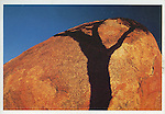 Tree shadow on Rock<br /> Postcard<br /> Approximately 4 x 6 in