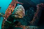 Ancient Mariner & United Caribbean Wrecks