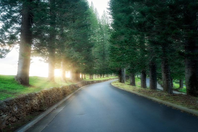 Road through Cook Island Pines. Kapalua, Maui, Hawaii.