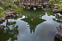 Trees and a gazebo are reflected in the Japanese Gardens koi pond while koi swim below.
