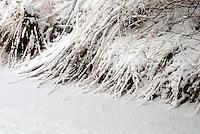 Vennen op landgoed de Utrecht, Noord-Brabant in de winter